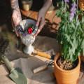 De effecten van Salvia divinorum